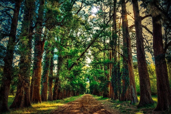 forest-2124041_960_720
